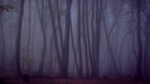 Dunkler Wald Mysteriös