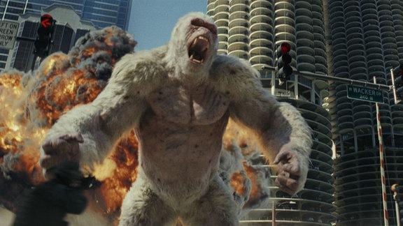 Win riesiger zähnefletschender Albino-Gorilla vor einer explodierenden Skyline.