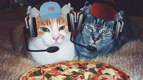 Die beiden Moderatoren als Katzen getarnt, mit Cappy, Beanie und Kopfhörern ausgestattet. Im Vordergrund eine fresh baked Pizza.
