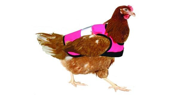 Ein Huhn mit einer pinken Warnweste