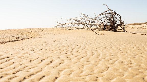 Ein vertrockneter Busch in der Wüste