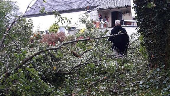 Umgestürzte Bäume in einem Garten. Fotografiert von Sophie in Altenweddingen.