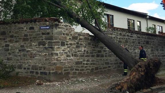 Ein entwurzelter Baum liegt auf einer zerstörten Mauer. Fotografiert von Olli aus Bernburg.
