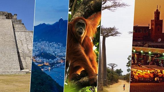 Collage/Mexiko | Brasilien | Indonesien | Madagaskar | Marokko