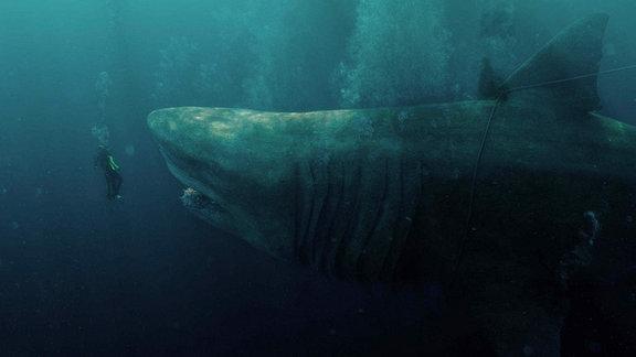 Taucher vor Riesenhai (Megalodon/Ur-Hai)