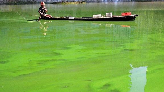 Entengrütze auf einem See in China